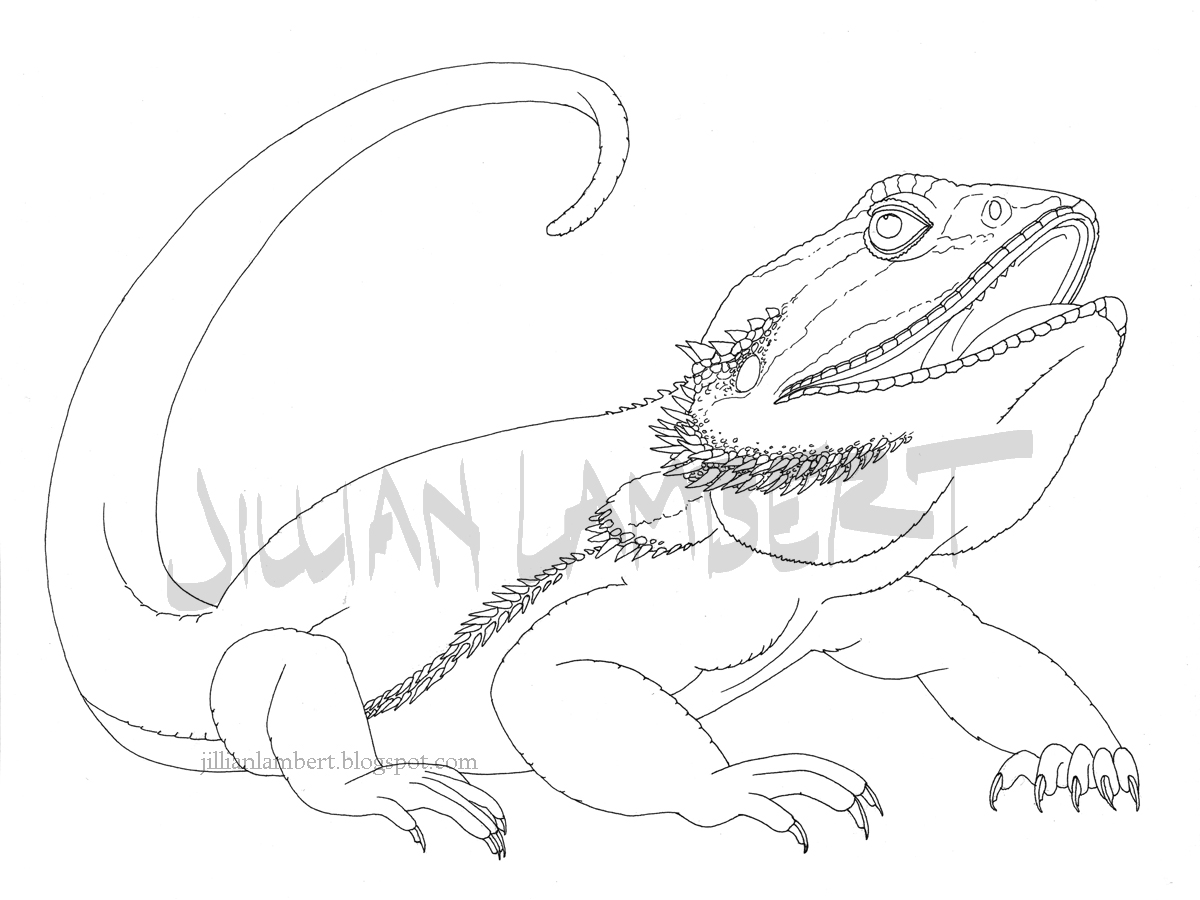 Free Bearded Dragons Coloring Pages Bearded Coloring Pages