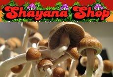 :: Cogumelos Magicos ::