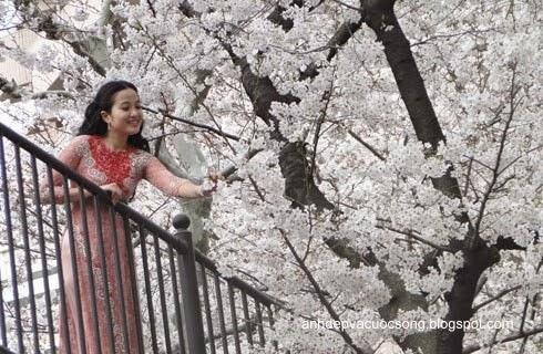Mc Hồng Phượng ngẩn ngơ trước hoa anh đào Nhật Bản 7