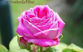 Reluciente, Como una rosa :)