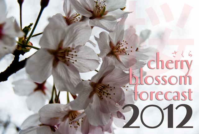 sakura, cherry blossom, spring, Japan, 2012, forecast, bloom