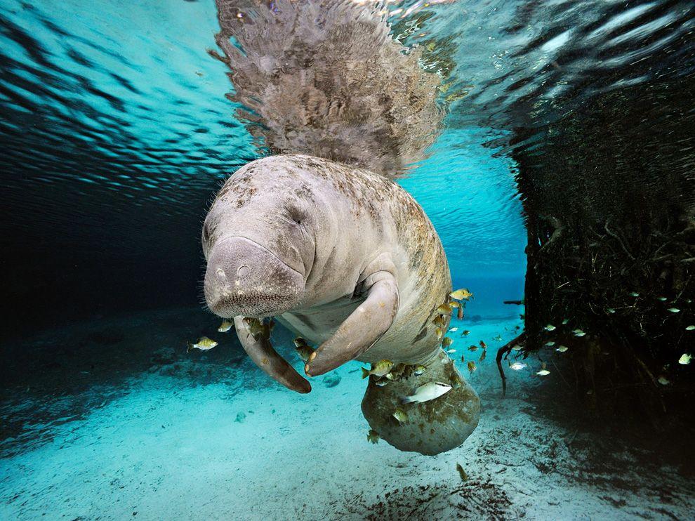 Подводный мир от National Geographic