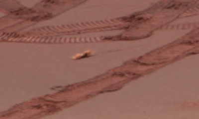Worm Creature Crawls Across Mars Surface, UFO Sighting News