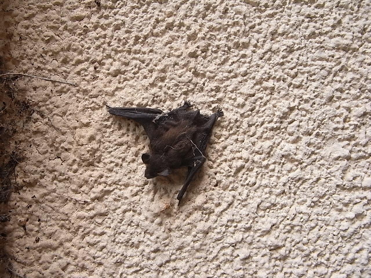Souris dans maison une troisime souris est capture elle nu0027est pas contente et la grille - Comment faire fuir les souris dans les murs ...