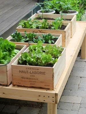 Huerto casero en tu jardín