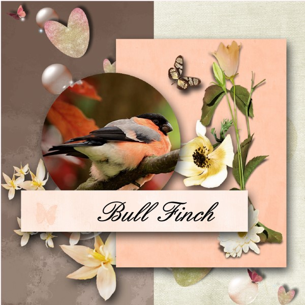 May 2016 - Bull Finch