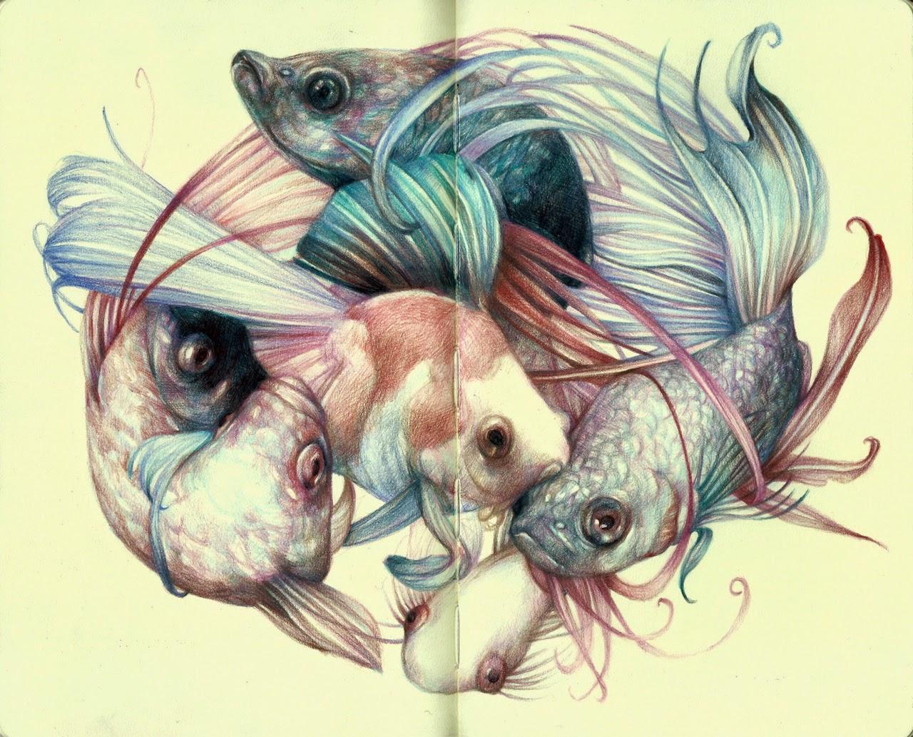 marco-mazzoni-illustrazioni-pesci