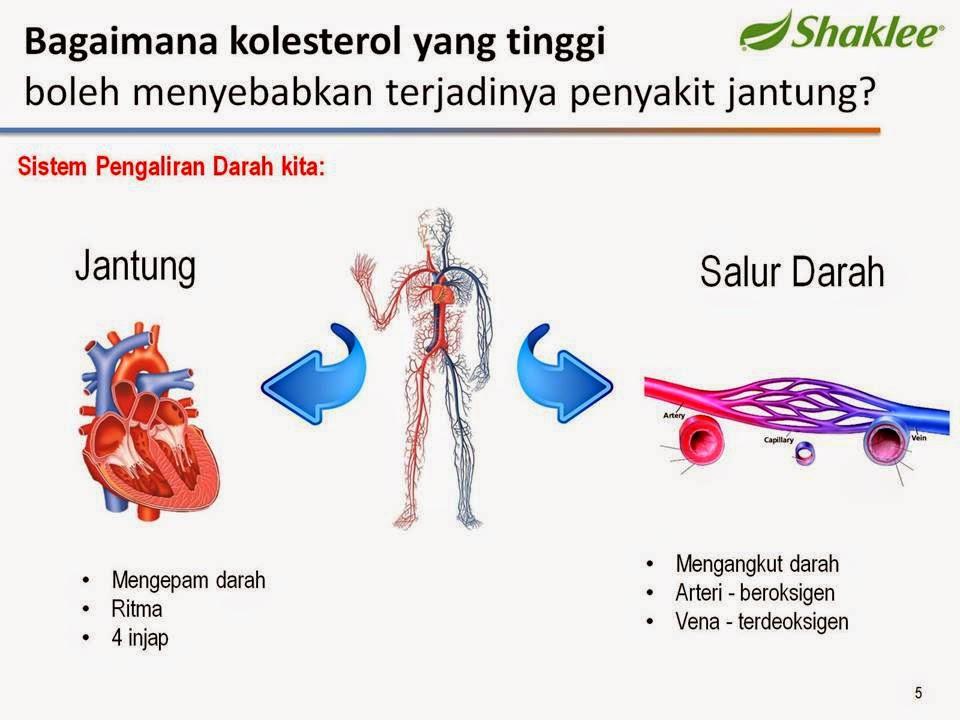 Kolesterol, Penyakit Jantung, Kebaikan Phystesterol, Mencegah Sakit jantung, Darah Tinggi, Kencing manis, jantung Berlubang, Kanser, Anti penuaan, Slimming Set Shaklee