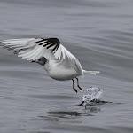 Avistamiento aves marinas
