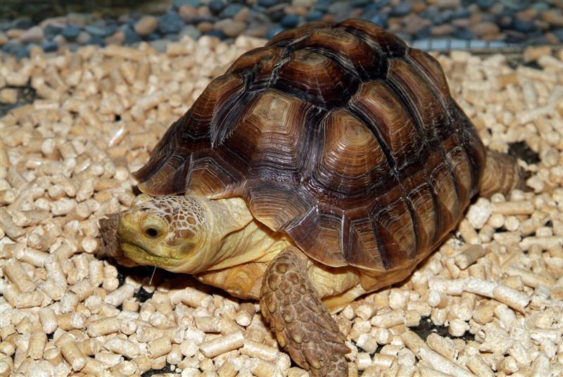 informacion de tortugas: