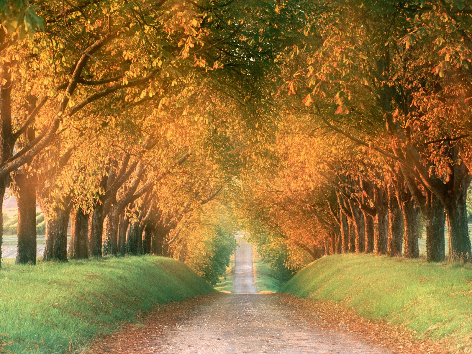 http://4.bp.blogspot.com/-pjUx45EqA9s/TVqcrbRVK7I/AAAAAAAAAMI/pVXS46GGap8/s1600/autumn_road%252C_cognac_region%252C_france.jpg