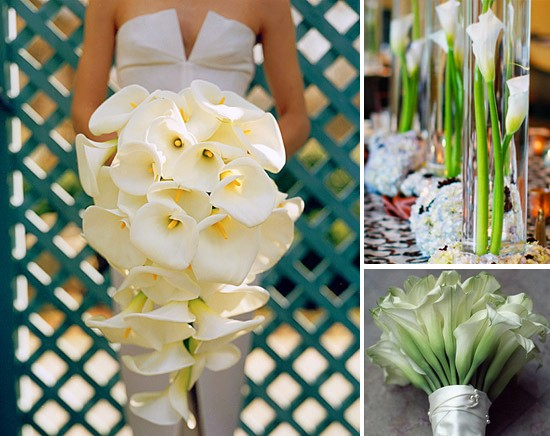 White Flowers For Wedding 36 Popular Calla lily wedding flowers