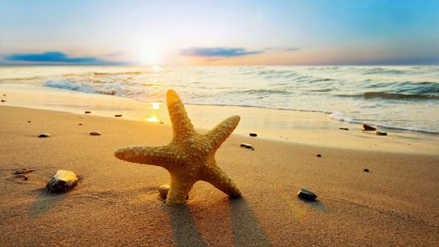 Imagenes de Estrella de Mar Playas en HD
