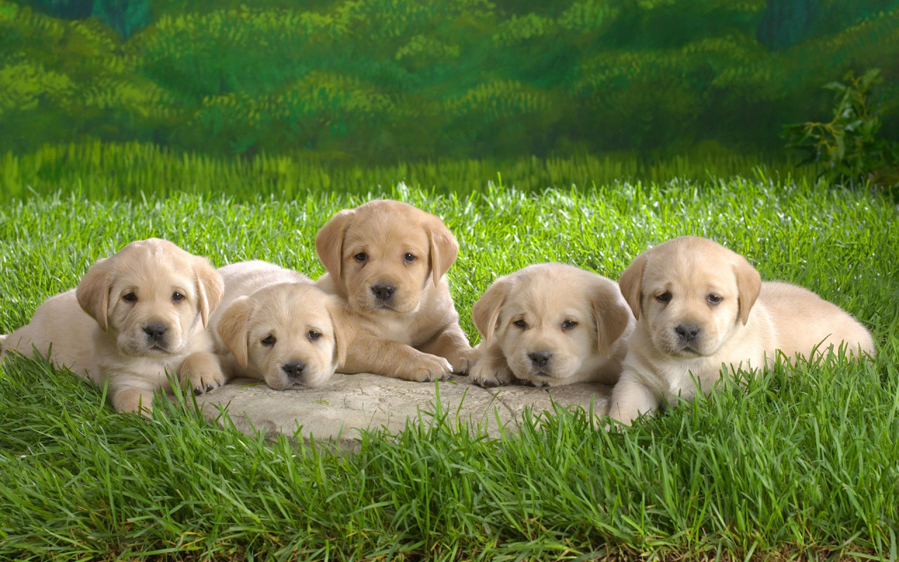 some cute puppies and dogs amazing wallpapers