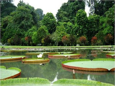 Kebun Raya Bogor   Wisata Alam Bogor