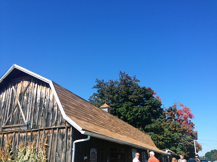Dressel Farms apple picking, bright blue sky
