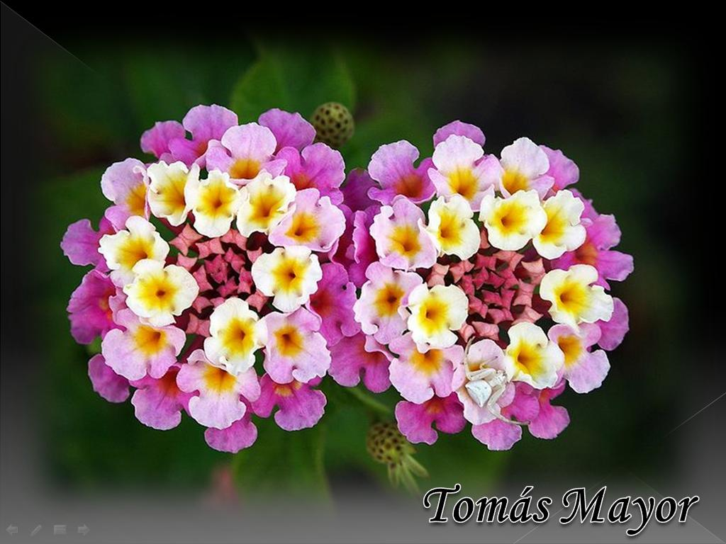 FLOWERS Beautiful and LOVELY