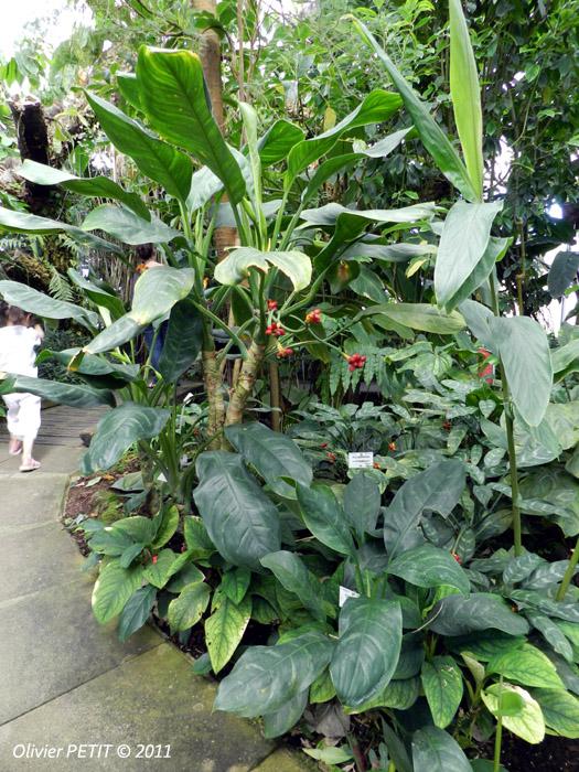 VILLERS-LES-NANCY (54) - Les serres du jardin botanique du Montet-Agloanema