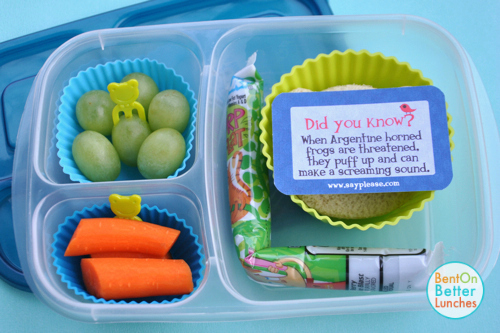 Frog bento school lunch