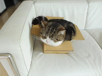 kucing dalam kotak