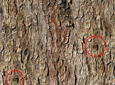 Как сделать текстуру на дереве