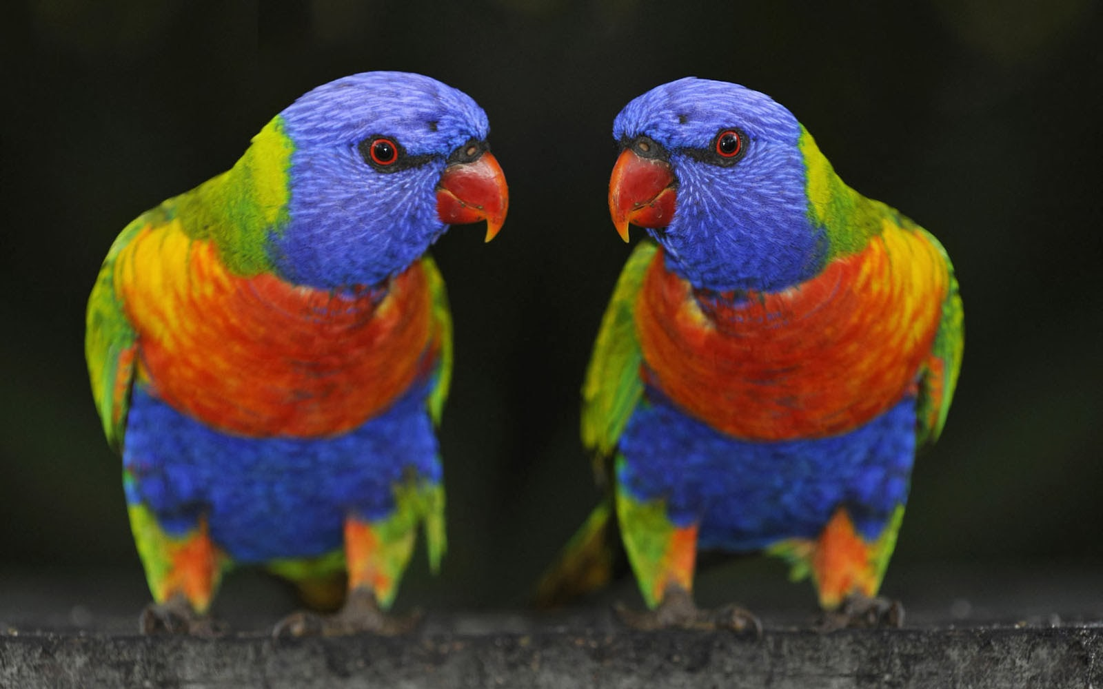Wallpapers Parrots Wallpapers