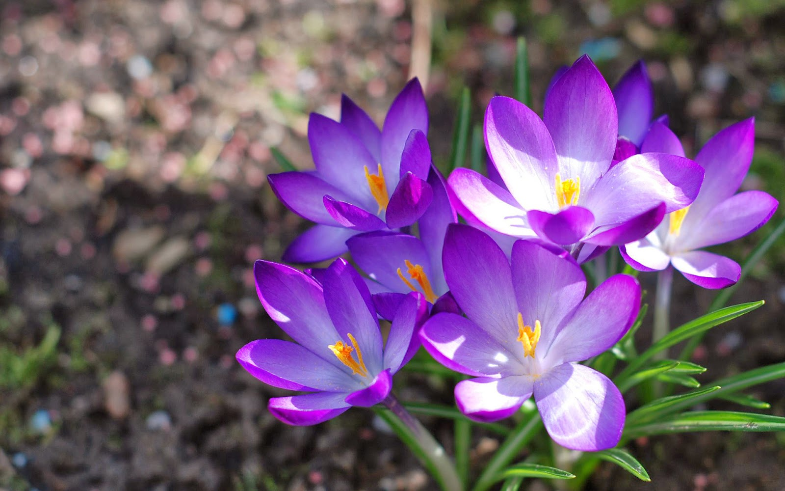 When It Comes To This Particular Bloom They Come In As Many Colors You Can Think Up Purple Blue Eggshell And Even Gold Not Just But There Are