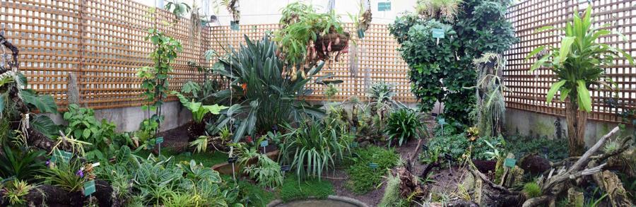 Las salidas del curso jose maria luengo marquina for Jardin botanico cursos