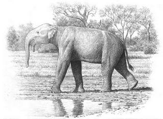 proboscidea prehistorica Chilgatherium