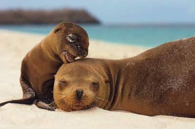 focas madre e hijo
