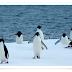 Vídeo.- Pingüinos - BBC