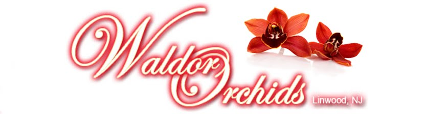 Waldor Orchids