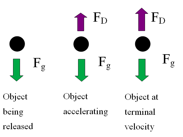 terminal velocity lab report Lab 4: fluids, viscosity, and stokes' law  in this lab, you will be placing objects of  ameasuring the terminal velocity of falling spheres 1.