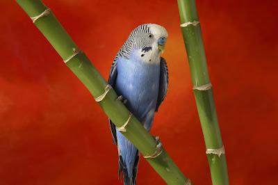 http://4.bp.blogspot.com/-pnTxSuAX4NY/TeeRQaPKYiI/AAAAAAAAAJg/EJf702Qxp3I/s1600/Nature+www.telugu-wallpaper.blogspot.com+%2528122%2529.jpg