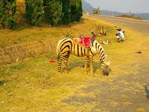 Pony en Lang Biang (Da Lat, Vietnam)