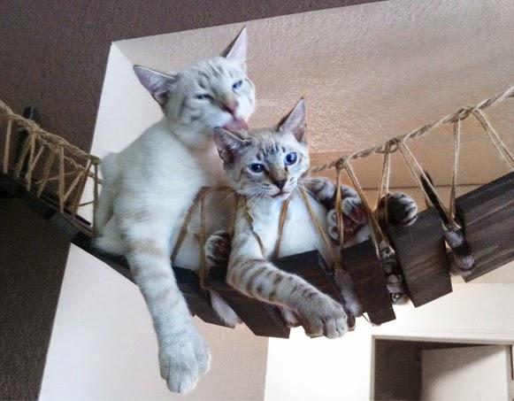 Pontes de gatos – Bem Legaus