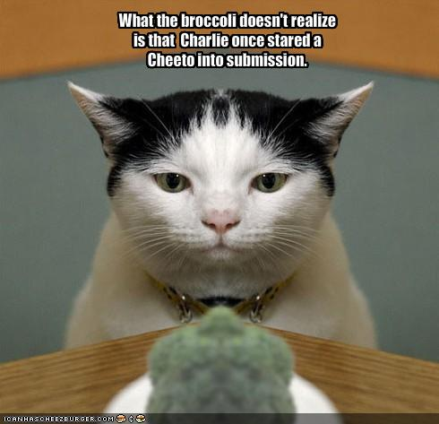 Funny Image Collection: Funny cat pictures with quotes | Cute cat ...