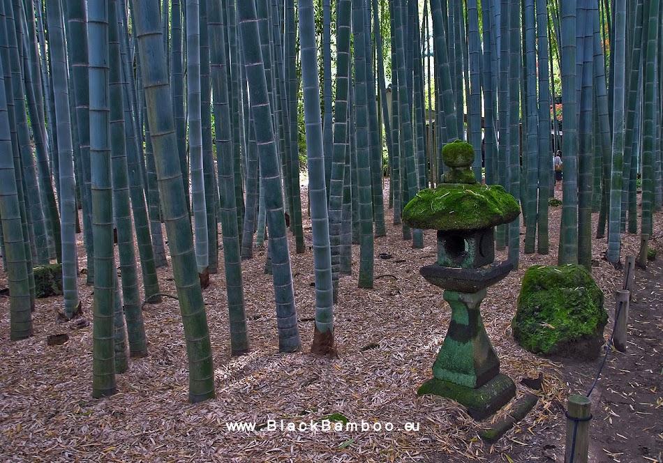 Hobby Gardening  - Bamboo - Blueberries - Roses