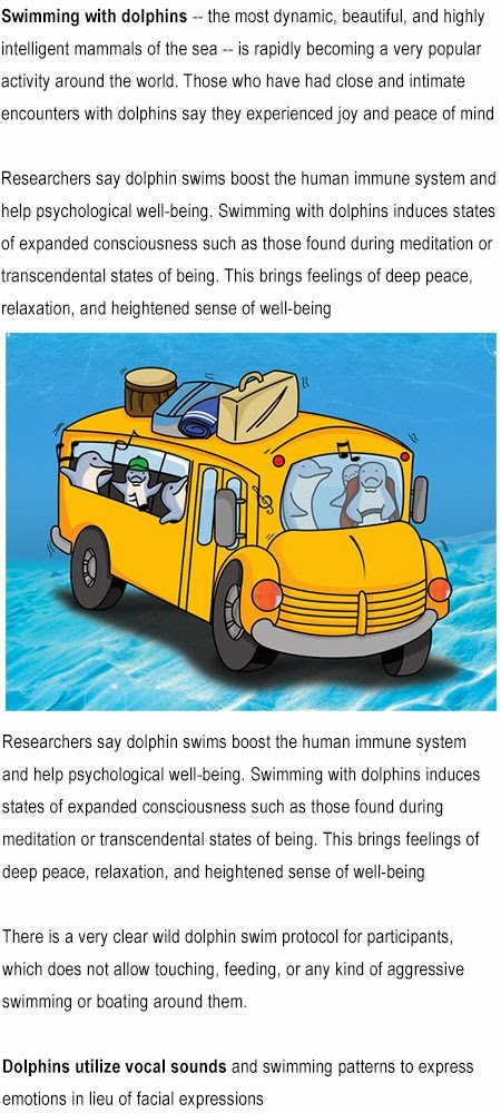 Information on dolphins for kids
