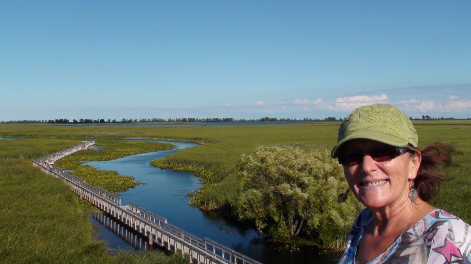 Boardwalks through the marsh.