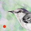 colored pencil drawing of mockingbird copyright Rose Welty