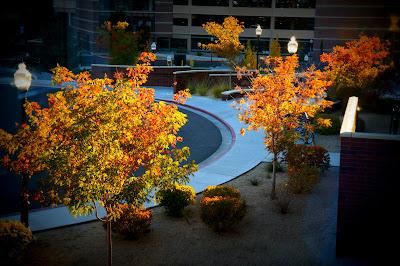Fall Season in Reno