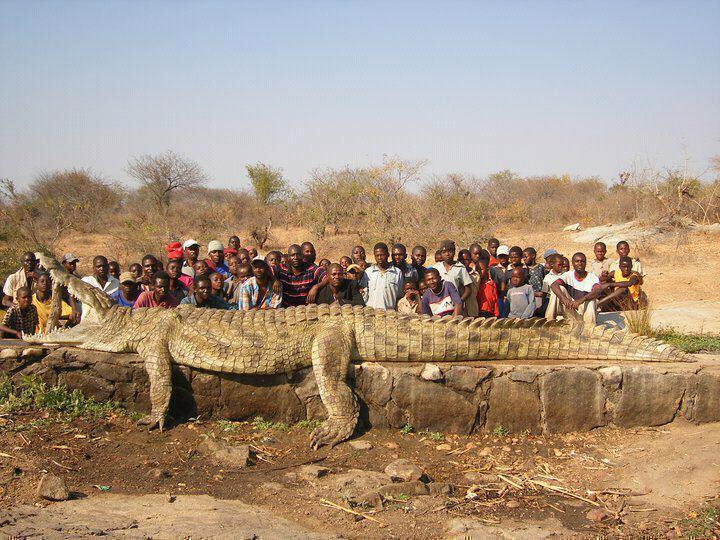 Biggest Alligator Ever Caught