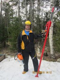 Pihakoivujen kaadot Pirkanmaalla Stalpen kaadonsuuntajan avulla Puunkaatopalvelu Tampere Pirkanmaa