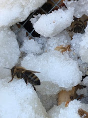 Winter in a Minnesota Hive.
