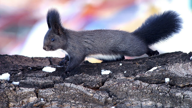 Squirrel Climbing HD Wallpaper