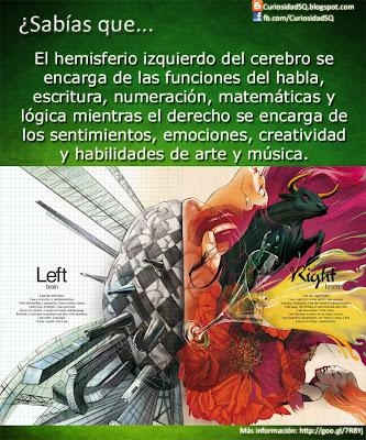 Funciones de los Hemisferio derecho e izquierdo