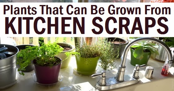 Plants That Can Be Grown From Kitchen Scraps