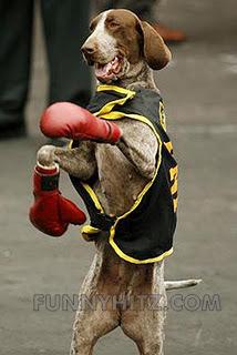 funny-dog-boxer.jpg