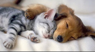 funny cat and dog sleeping away